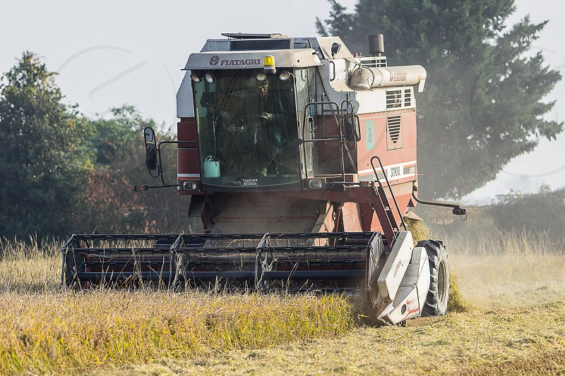 harvester in the field of grain photo
