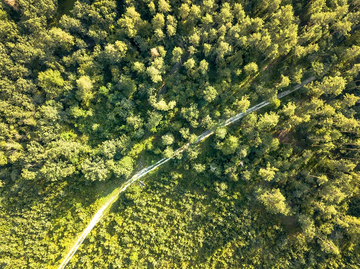 Dirt road passing through a green forest on a clear summer day. Aerial view from the drone natural layout for your ideas. Top view photo