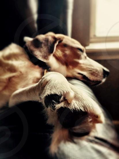 Comfortable Pup photo