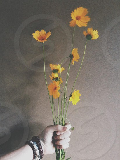 person holding yellow daisy flower photo
