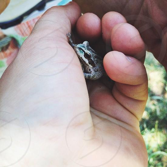 baby frog photo