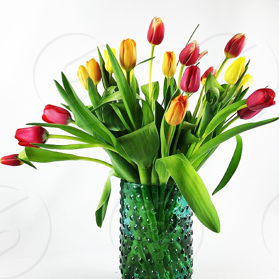 Spring spring colors tulips bouquet  photo