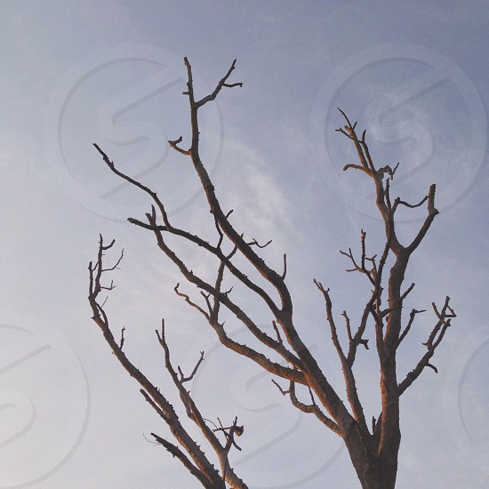brown tree with no leaves photography photo