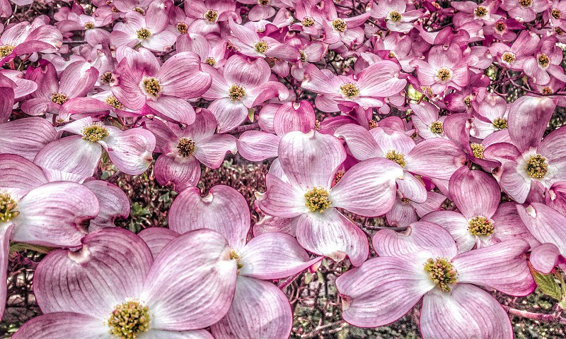 pink flowers in high sharp photography photo