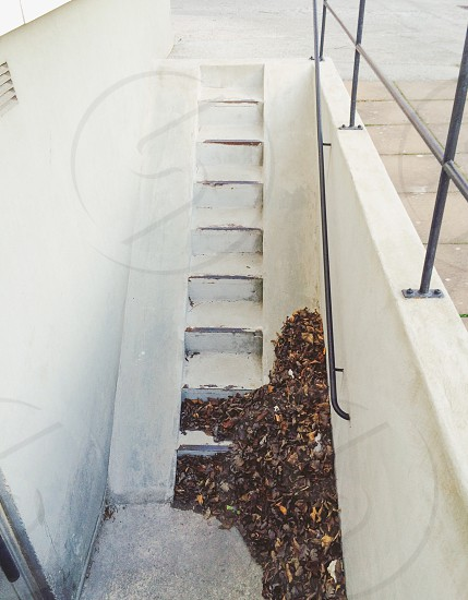 brown dried leaves on gray concrete staircase photo