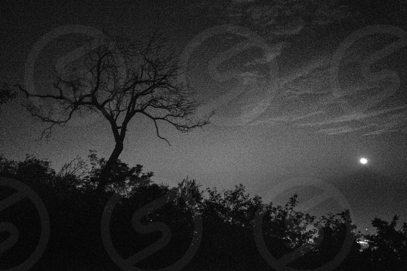 Spooky landscape at night. photo