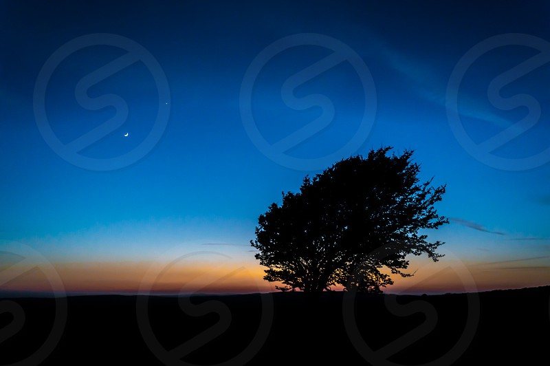 Tree moon sunset lonely shadow evening southdowns colour photo