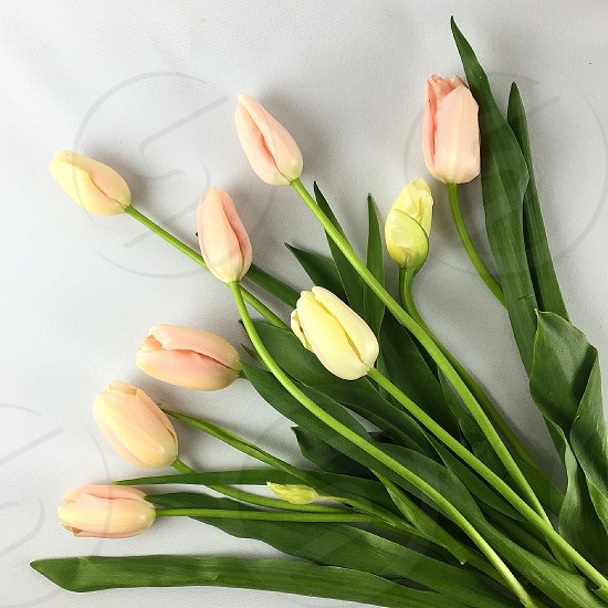 Spring tulips pink spring colors bouquet  photo
