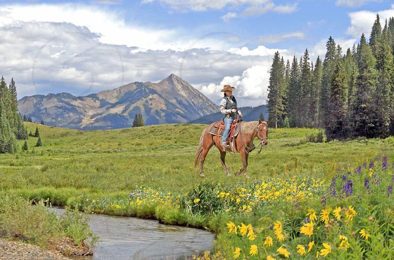 A horse and rider walk through a mountain meadow near Crested Butte Colorado  photo