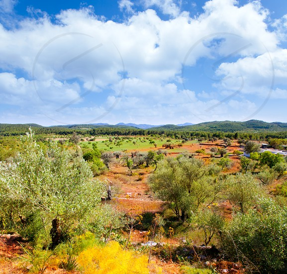 Ibiza island landscape with agriculture fields on red clay soil photo
