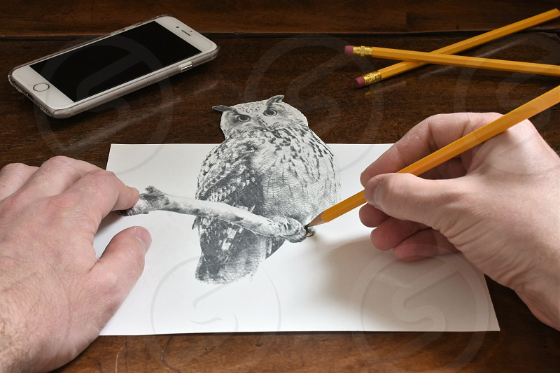 3D owl  photo