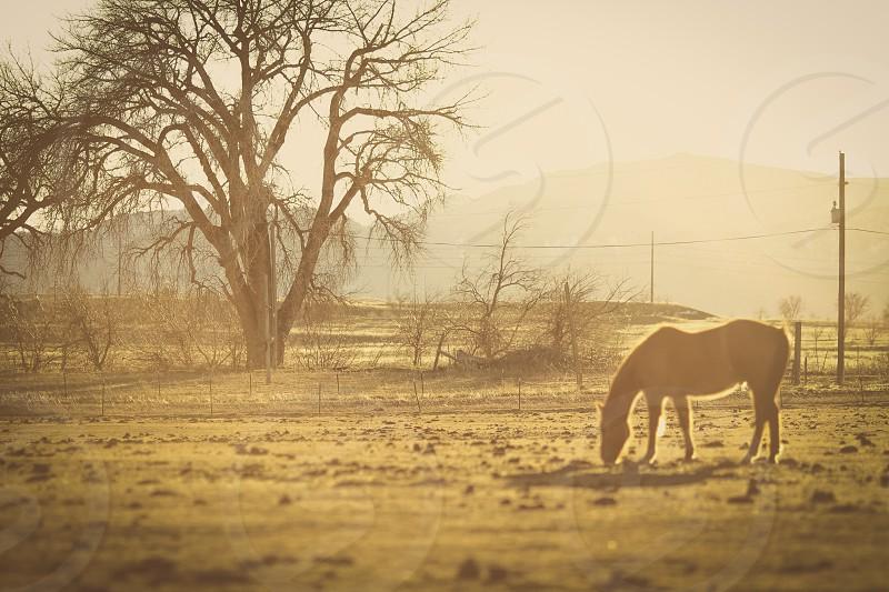 Farm Country photo