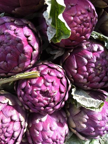 Purple artichokes photo