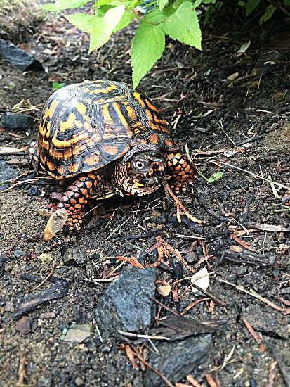brown and orange turtle on ground during daytime photo