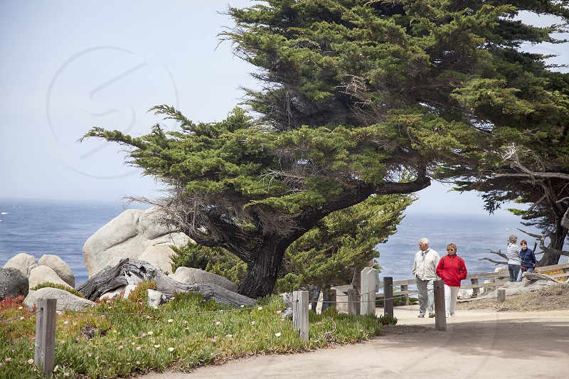 17-Mile Drive; Carmel-by-the-Sea; California; Pacific Ocean; travel; park photo