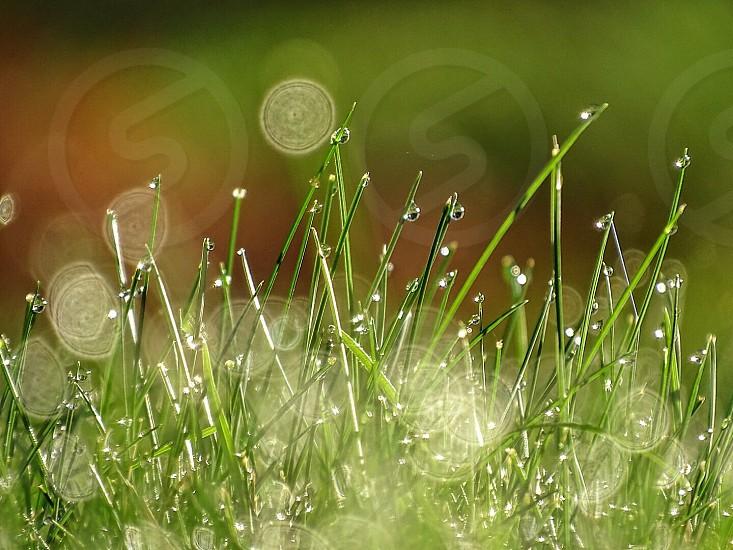 green grass photography photo