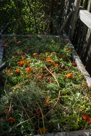 a compost heap with vegetable waste in the garden  photo