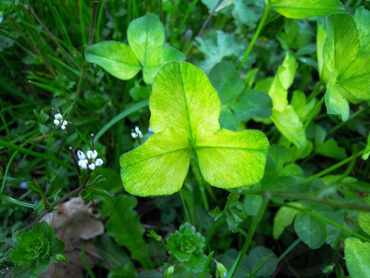 tree flower nature photo