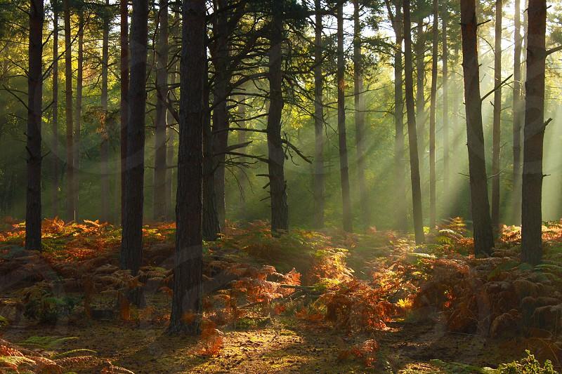 Autumn woodland light photo