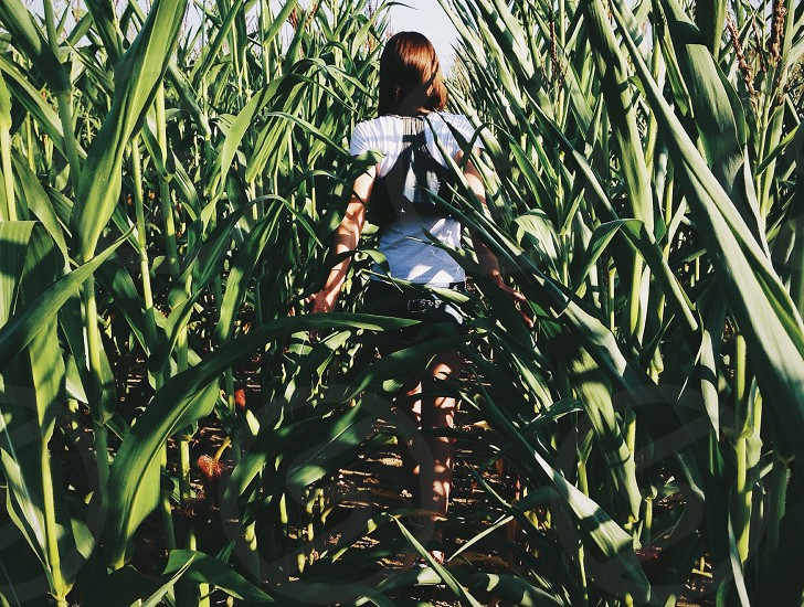 woman with brown hair walking inside corn field during daytime photo