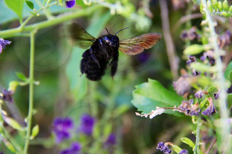 Bumble bee flowers nature photo