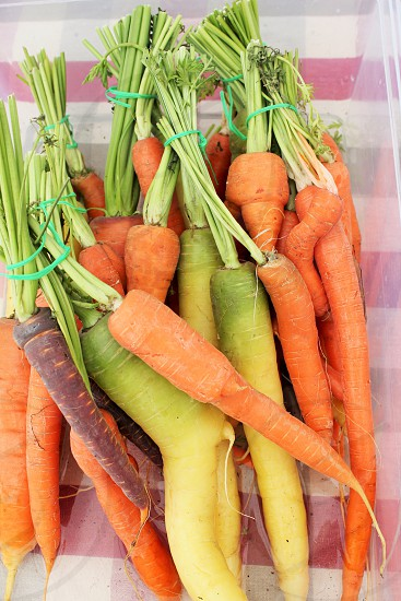 Organic farm stand carrots  photo