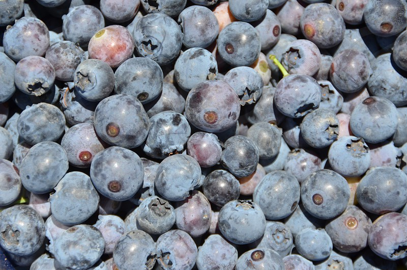 Fresh blueberries  photo