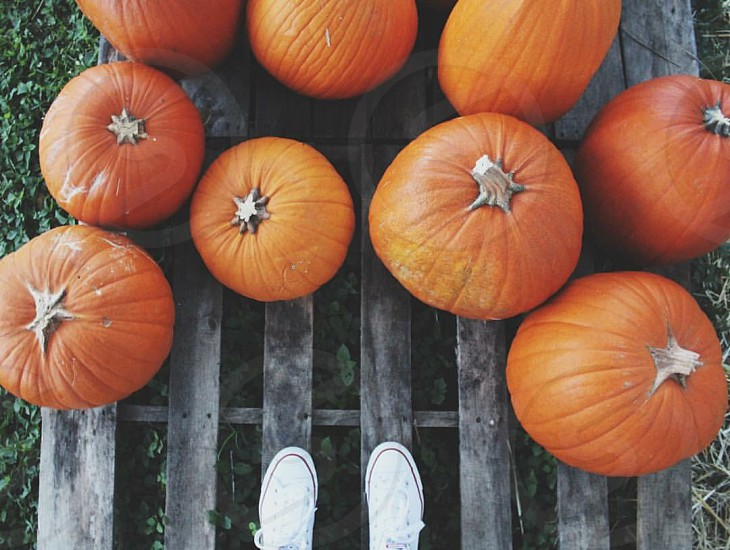 Fall; autumn; pumpkins  photo