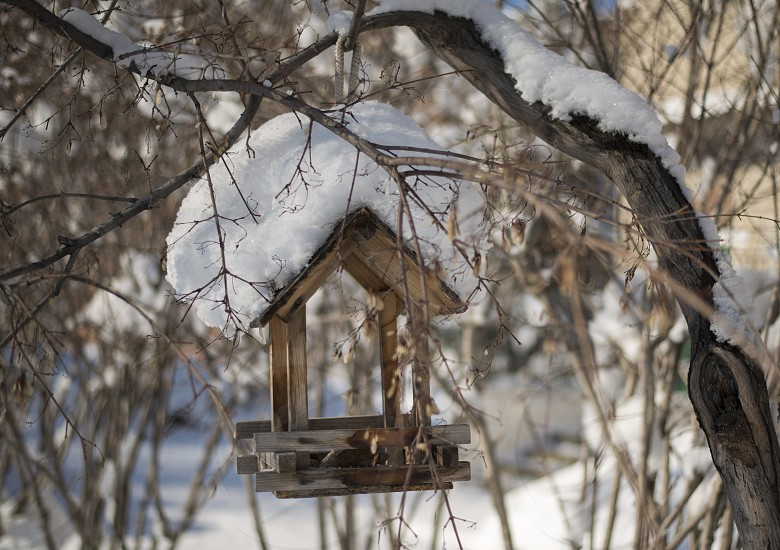 winter birdhouse snow could outdoor park garden nature beautiful photo