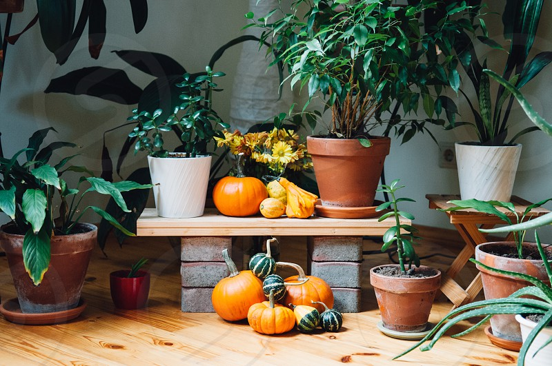 potted plants photo
