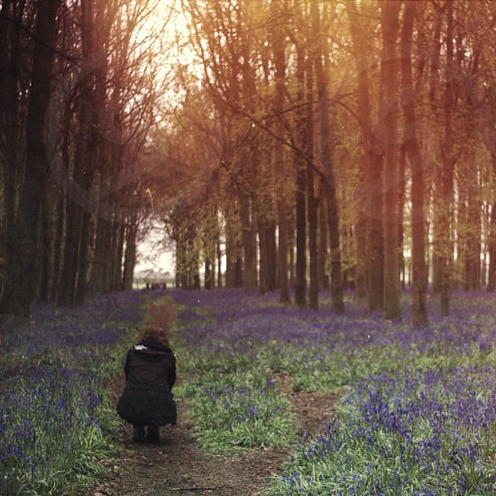Bluebells light girl crouching pathway path fairy tale woods forest bluebell trees isolated flower flowers countryside photo
