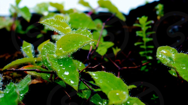 focus photo of green leaf plant photo