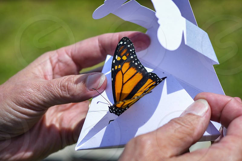 Earth earth day butterfly release nature animal insect photo