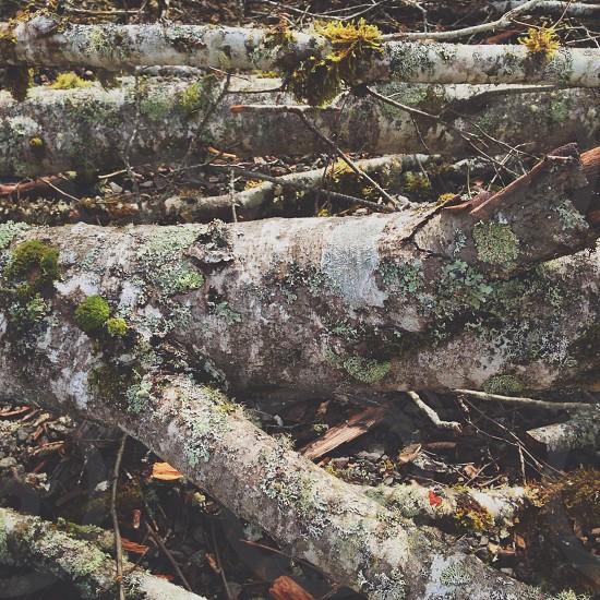 brown tree trunk  photo