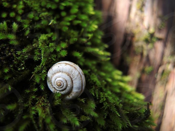 white snail on green tree photo