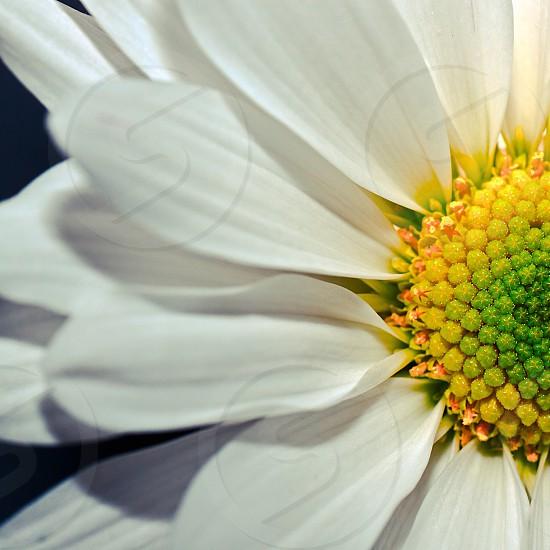 white flower macro shot  photo