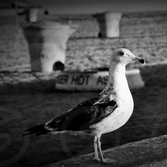 Birds eye view photo