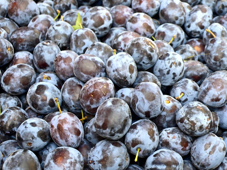 fresh harvested plums photo