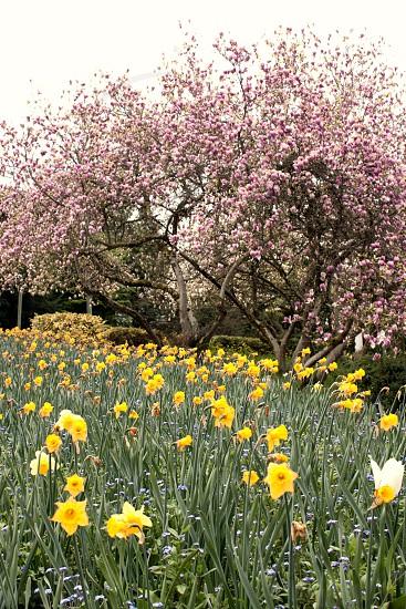 spring pink yellow flower photo