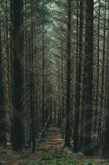 Adventure walkway mountainScotland  outside. photo