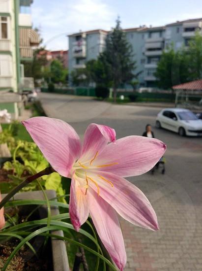 pink flower close up photo