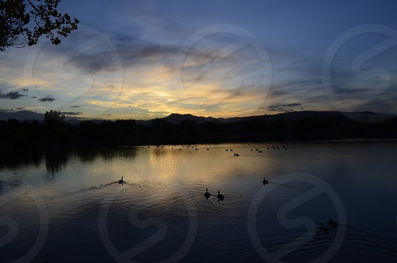 Ducks at sunset photo