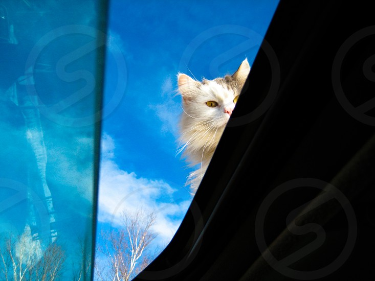 cat feline car sun roof peak sky photo