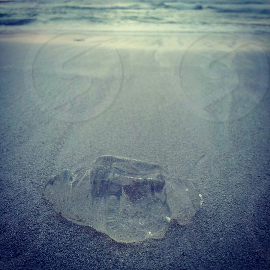 Square shaped jellyfish that looks like an ice cube on a beach at dusk / sunset photo