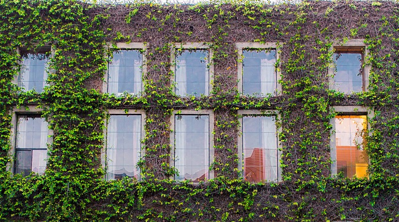 Building leaves overgrown photo