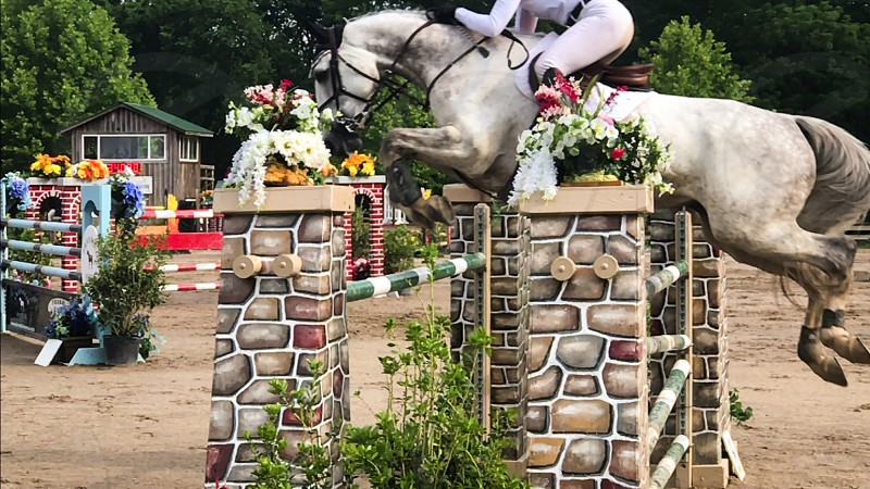 Horse equestrian horse life equestrian life equestrianism horse show sports event sport competition show jumping Grand Prix  photo