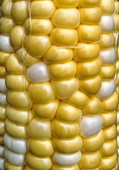 yellow and white corn on the cob photo