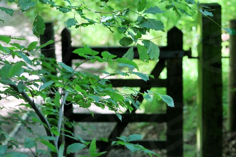Gatewaygatepublicfootpathcountrysideruralnaturenaturalwoodsgreentreesdark and light photo