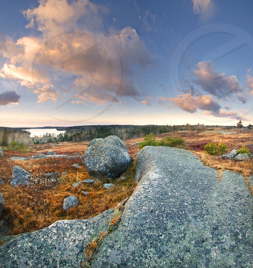 A windy fall day on a blueberry barren in Maine with a boulder and some exposed granite. photo