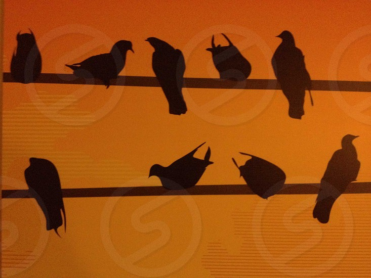 birds standing on telephone wires photo
